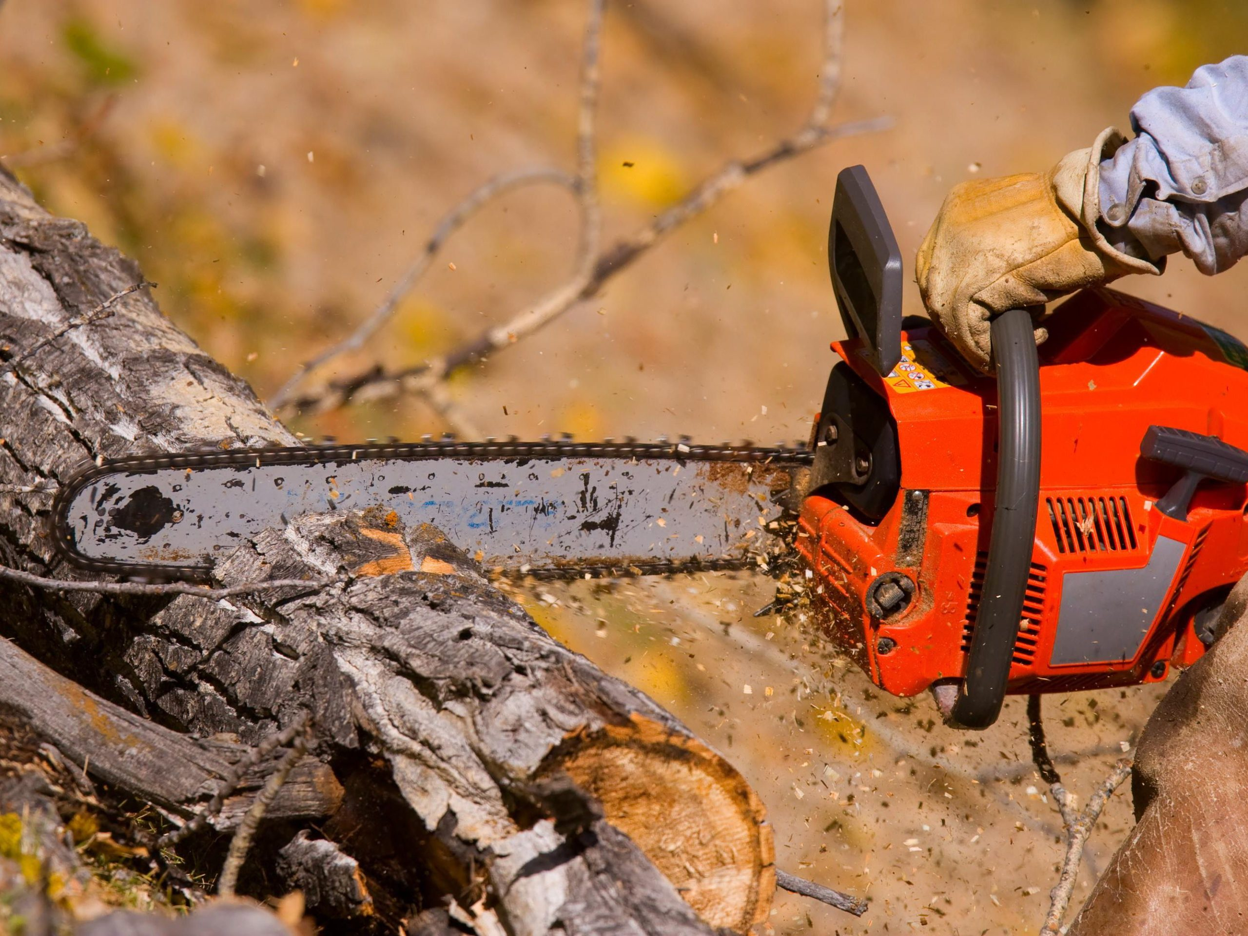 chainsaw is cutting the log