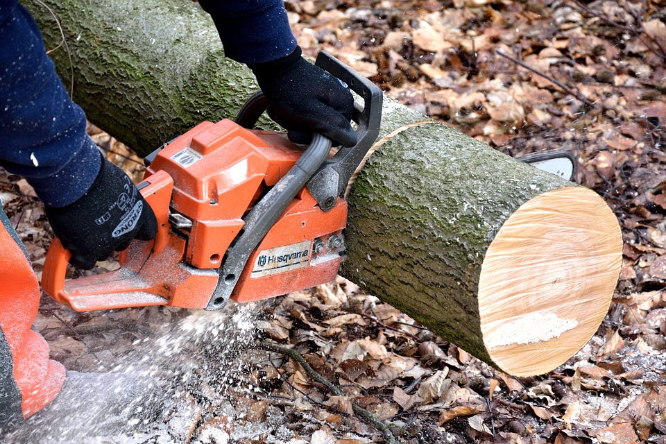 chainsaw is cutting the round log