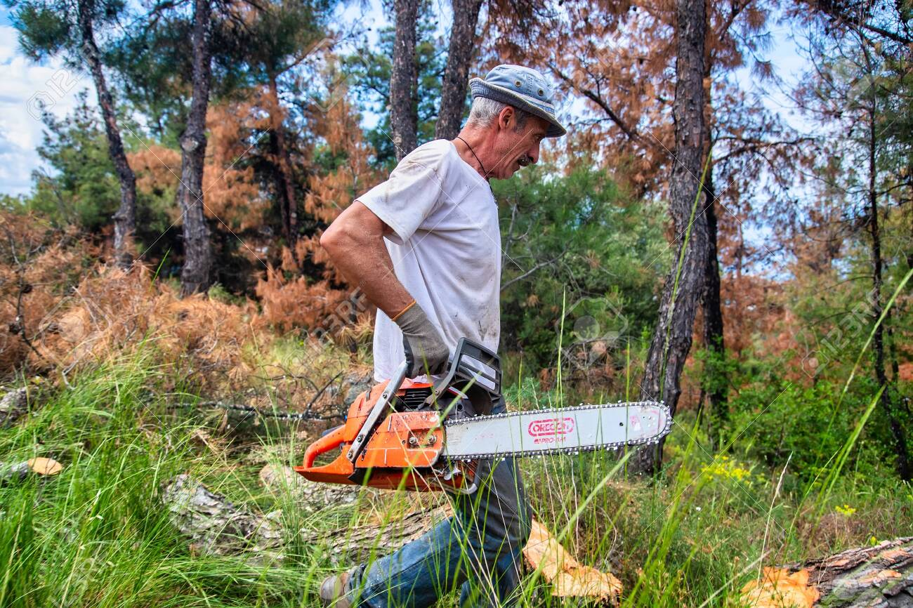 man is going with chainsaw in a forest